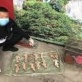 【案件(jian)】新興周邊某飯店;查獲蛇類野生動物39條,松(song)鼠13只!依法擬對yuan)梅溝?fa)款57225 ...